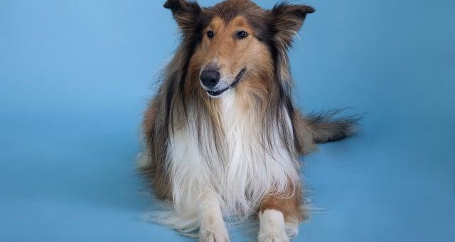 צילומי כלבים – גם להם מגיע בוק :)